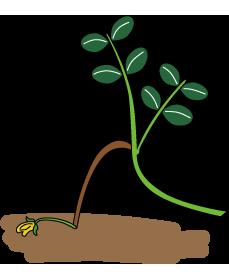 落花生のひみつ